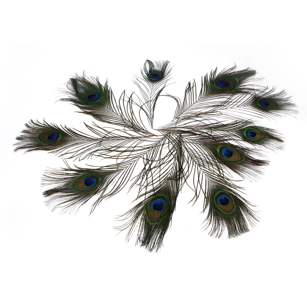 10pcs natural real peacock tail feathers about 10 12 for Peacock feather decorations home
